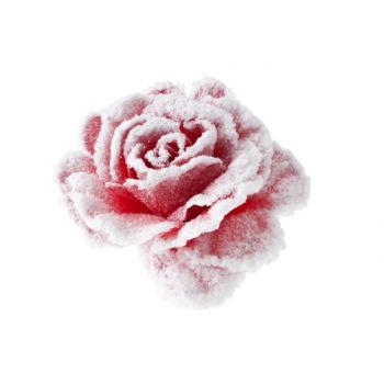 Cosy @ Home Rose Sur Clip Rose Enneige D10cm